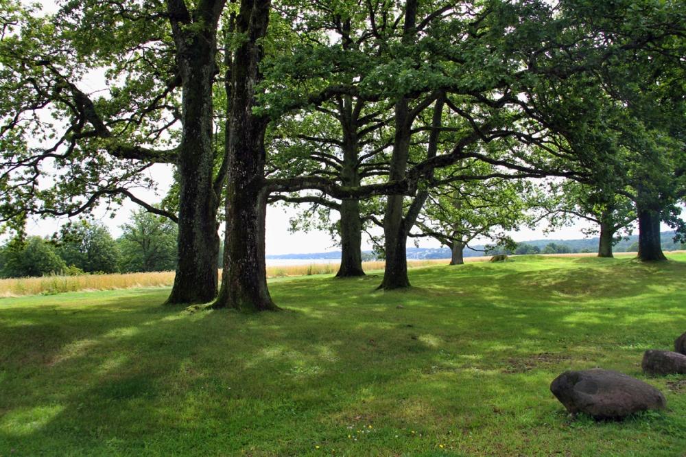 Sacred Oak Grove