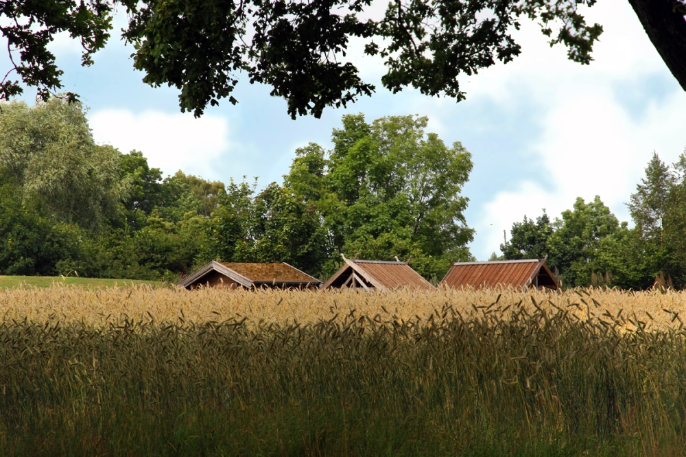 Viking Sheds in Field