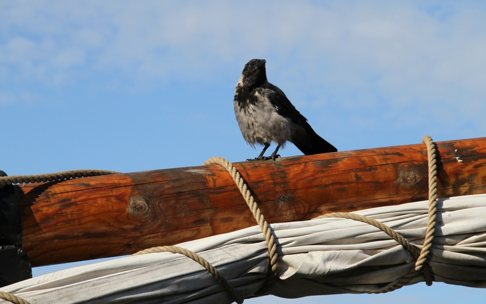 The Crow on the Sail Mast