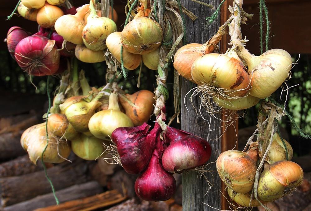 drying-onion