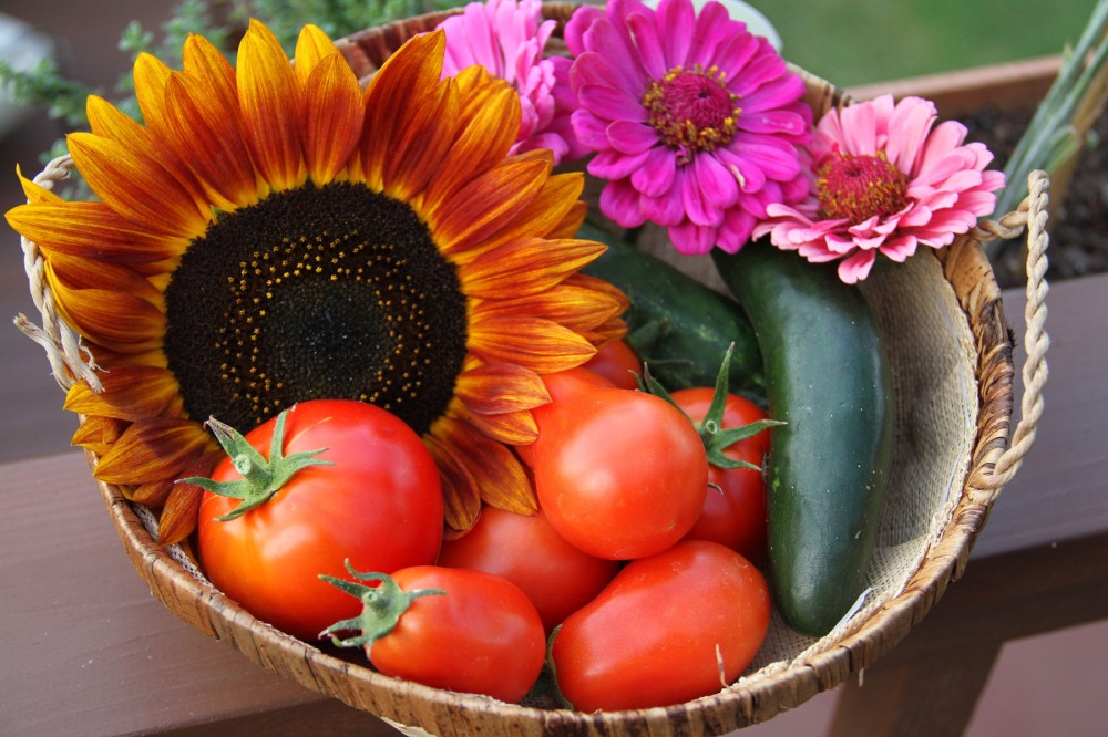 flowers-tomatoes-and-cucumbers-from-the-garden