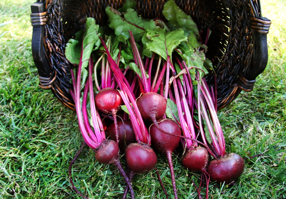 fresh-beets