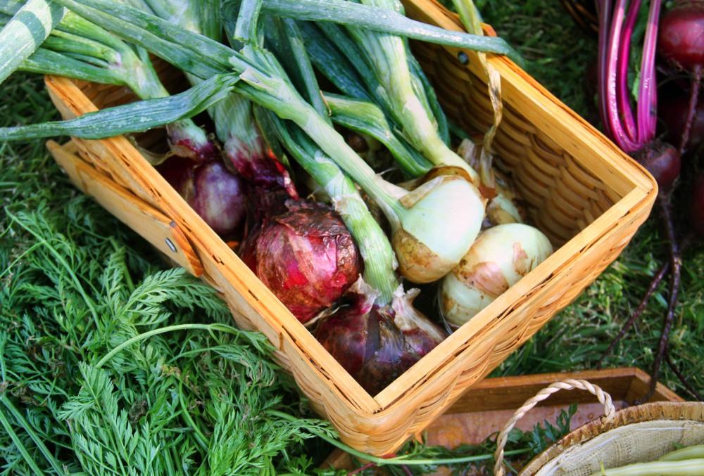 onions-in-basket