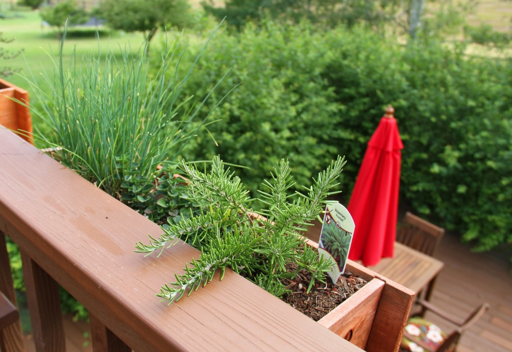 rosemary-and-chives