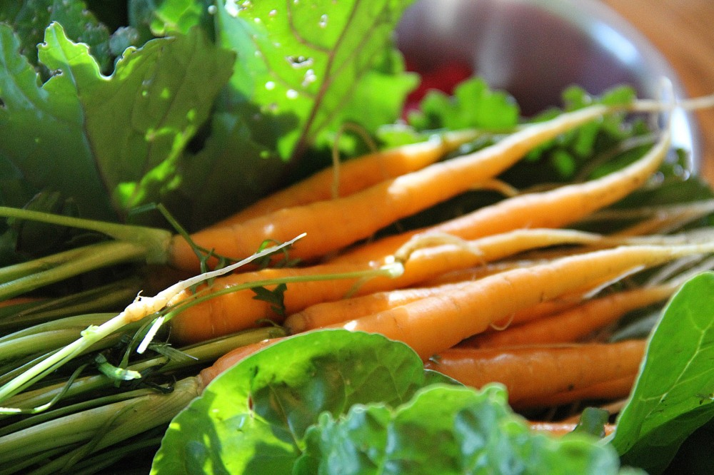 spring-carrots-3