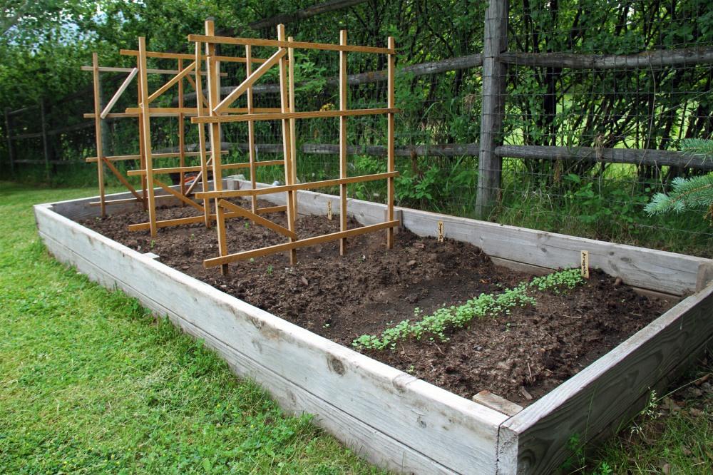 the-pea-garden-1