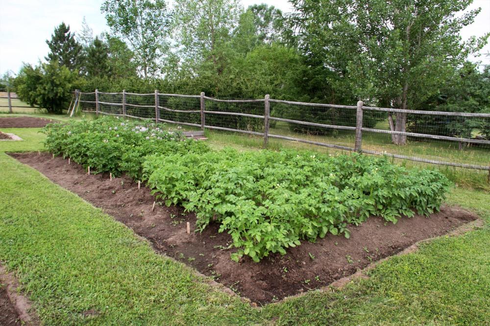 the-potatoe-garden-1